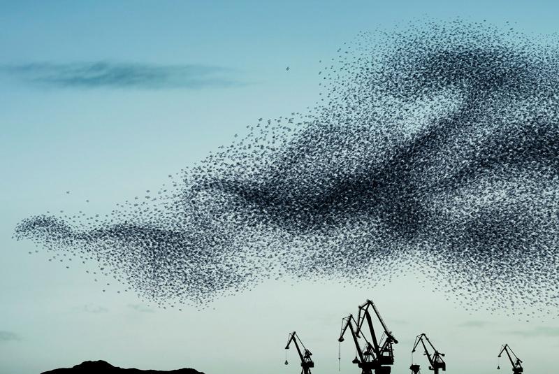 """Alain Delorme, """"Murmurations: Ephemeral Plastic Sculptures"""""""