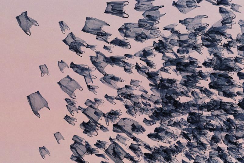 "From ""Murmurations: Ephemeral Plastic Sculptures"""