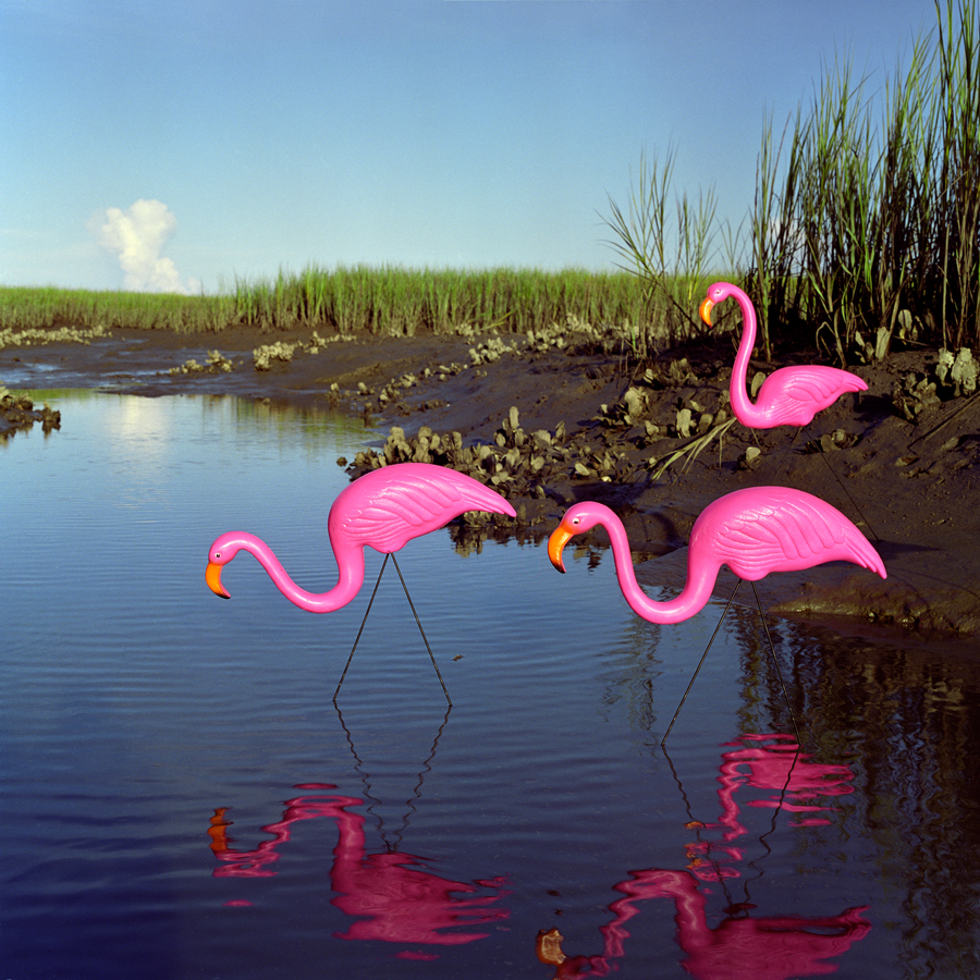 "Alexander Diaz, ""Caribbean Flamingos, Everglades National Park"""