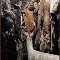 Daniëlle van Ark