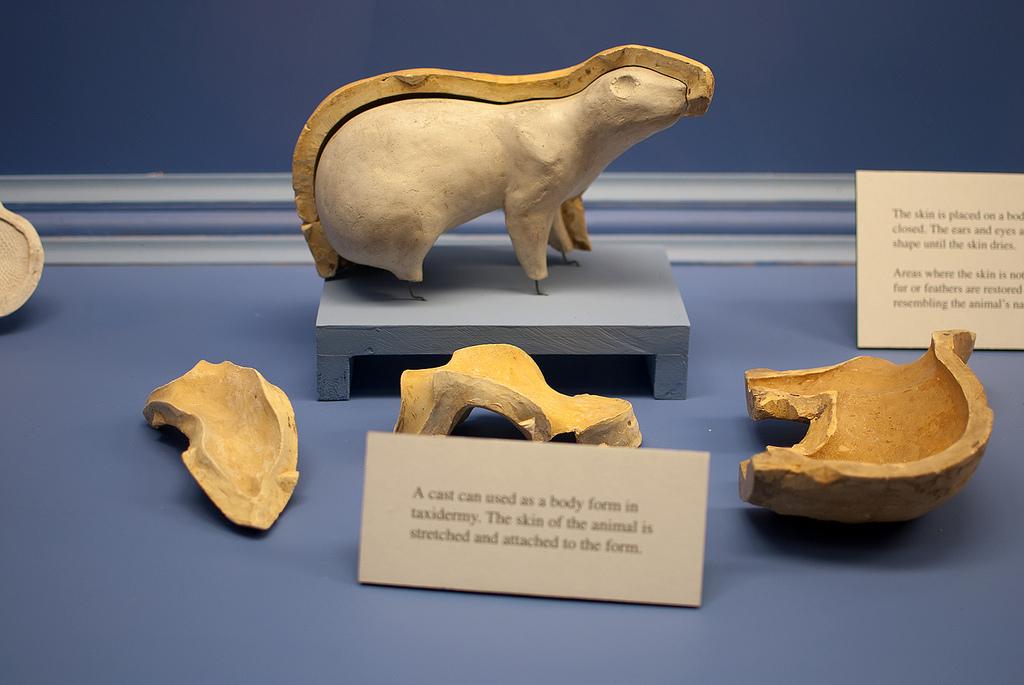 KU Natural History Museum