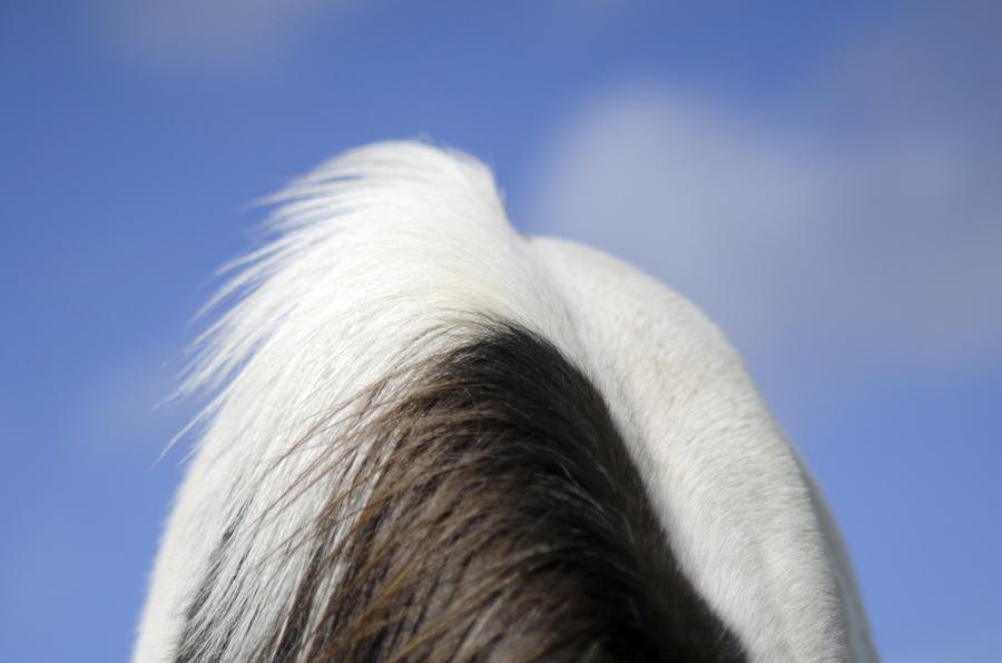 """Lindsay Blatt, """"Herd In Iceland"""""""
