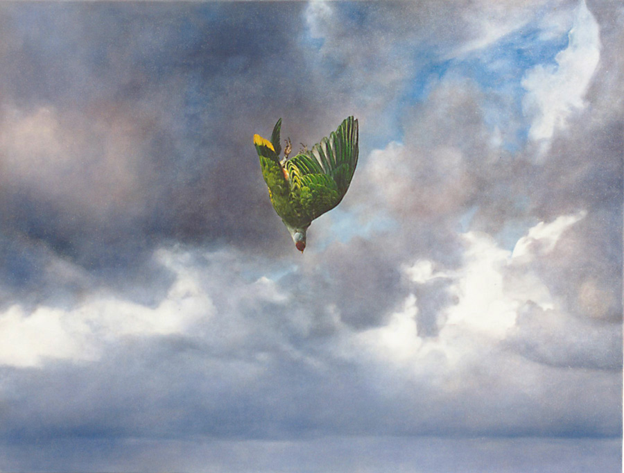"Lisa Adams, ""Falling Bird"""