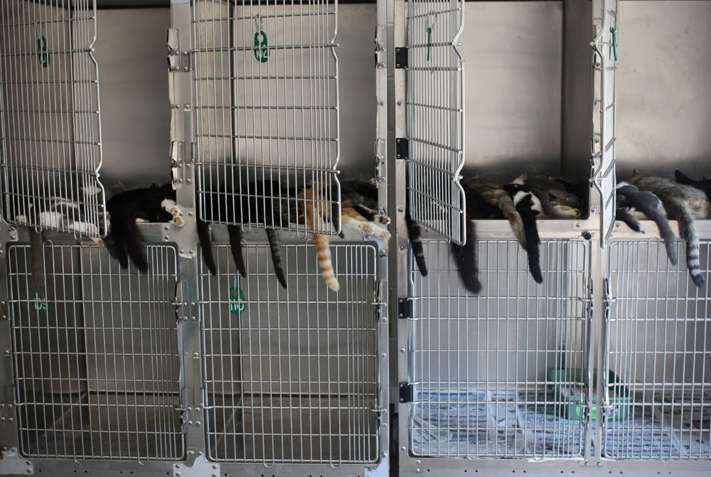 On this particular day in May, 55 cats were euthanized at one animal shelter in North Carolina