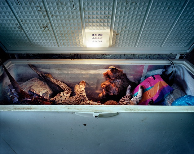 "Rafal Milach, ""Taxidermist's workshop. Freezer with frozen wild animals."""