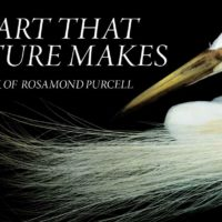 Rosamond Purcell