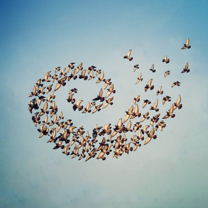 "Shaun Kardinal, ""Flying Formation"""