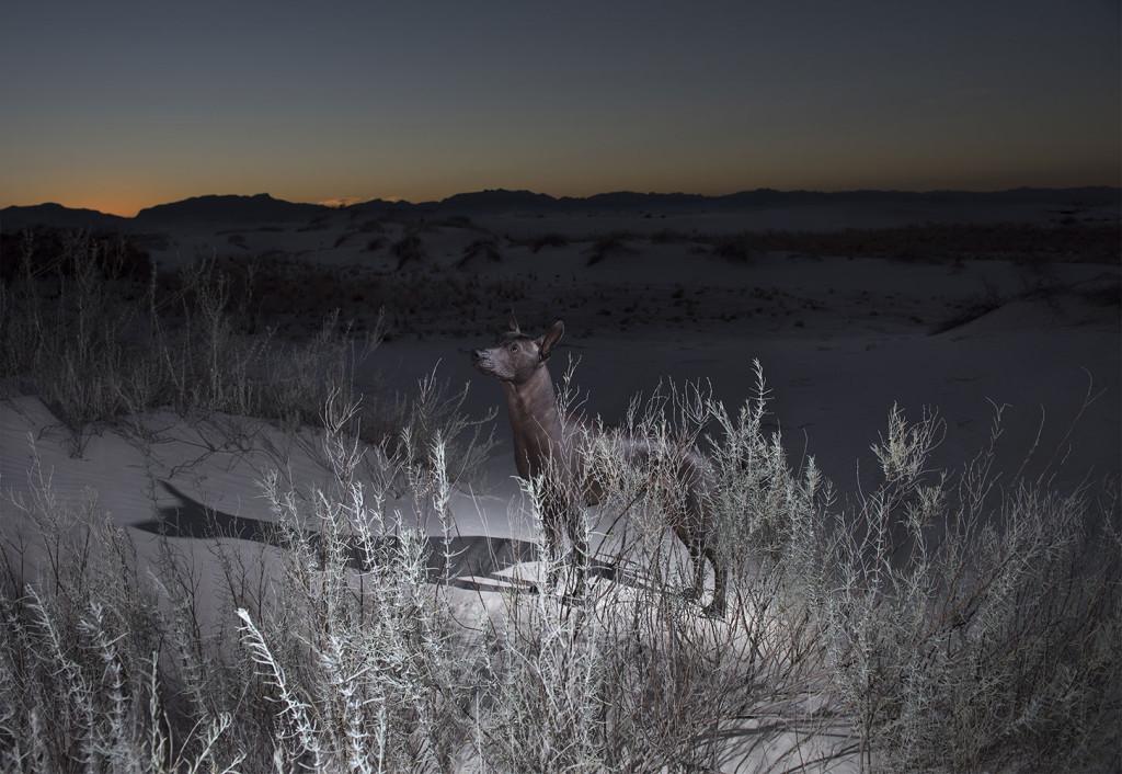 "Life Framer Photography Competition: ""Animal Kingdom"""