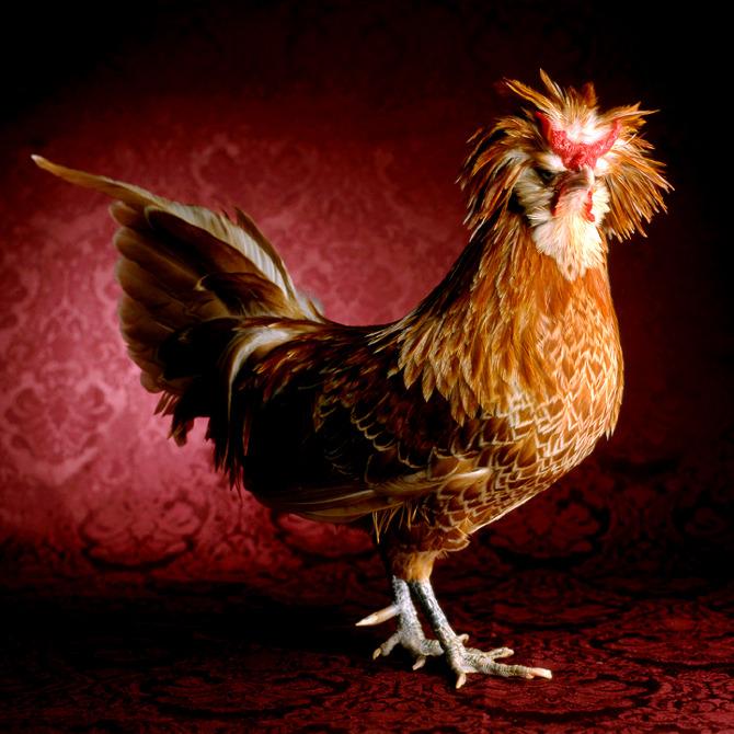 """Tamara Staples, """"The Fairest Fowl"""""""