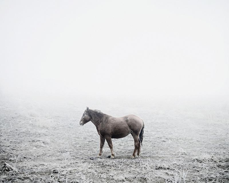 "Tamas Dezso, ""Cart Horse (near Silvasu de Sus, West Romania)"""
