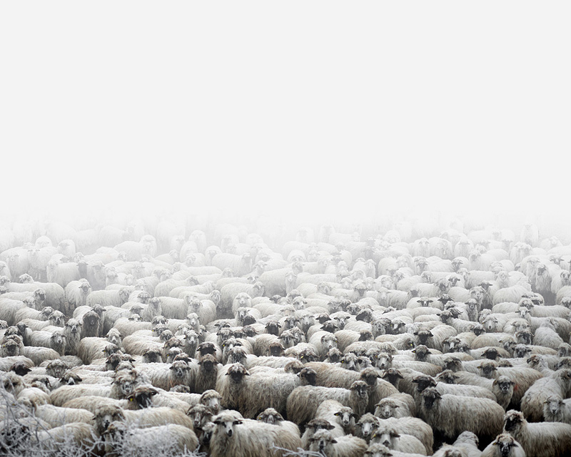 "Tamas Dezso, ""Sheep farm (Silvasu de Sus, West Romania)"""