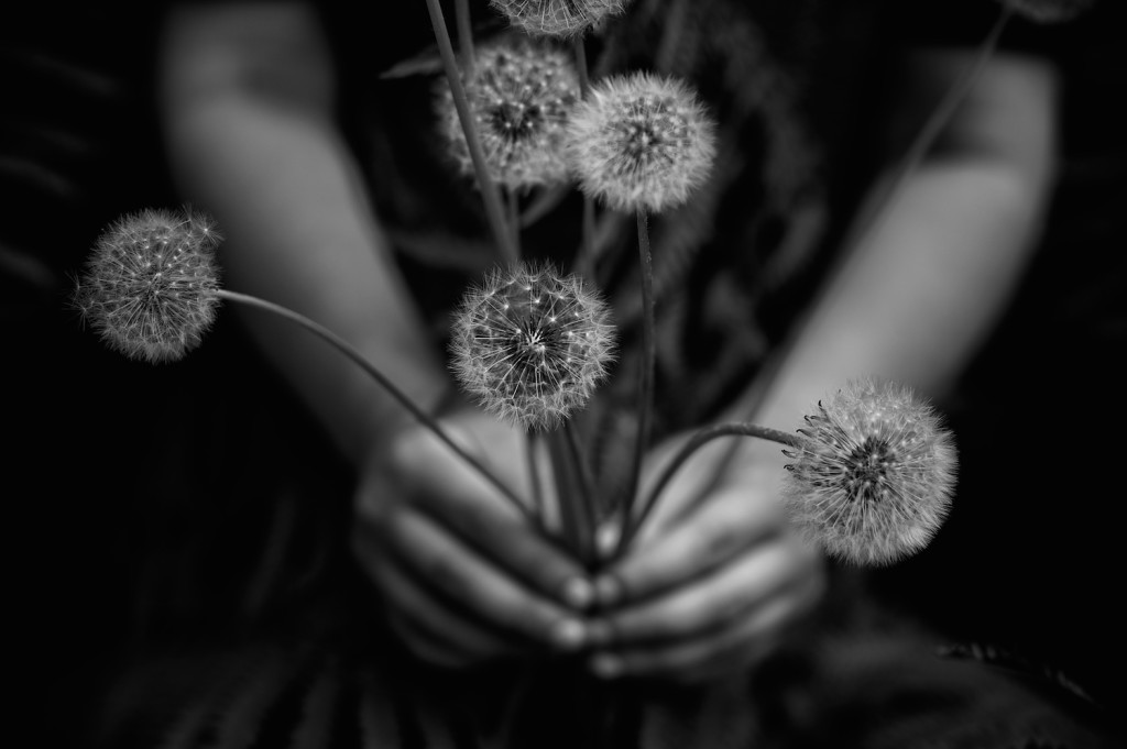 "Tytia Habing, ""Bouquet II"""