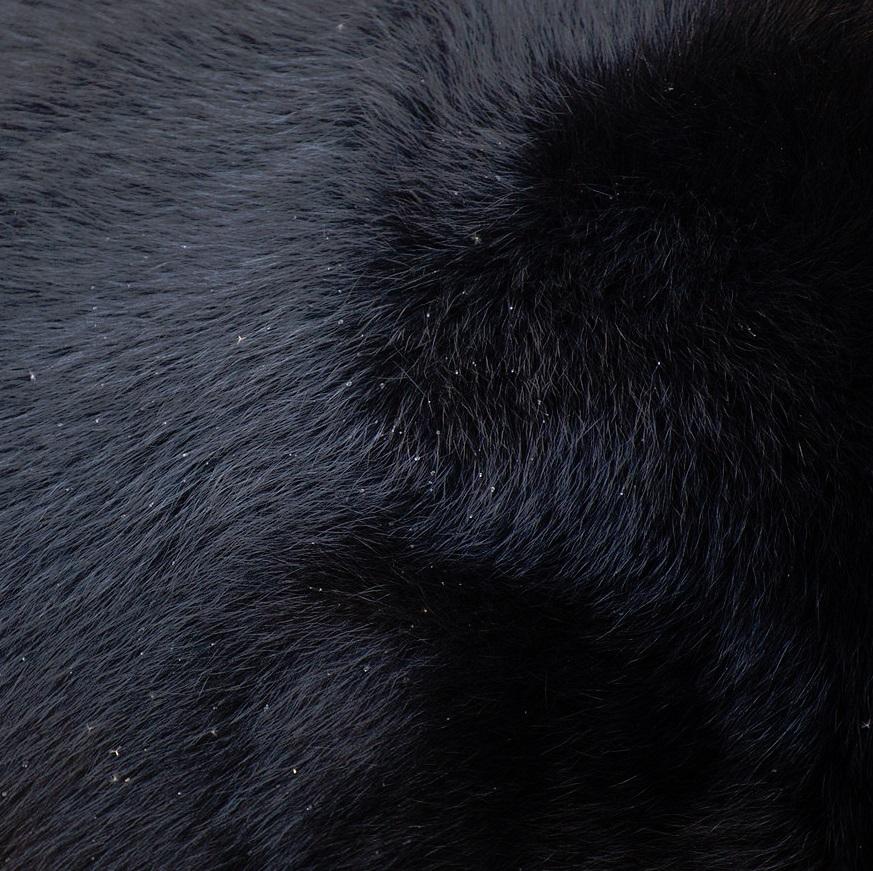 """Yusuke Sakai, """"Asiatic Black Bear"""""""